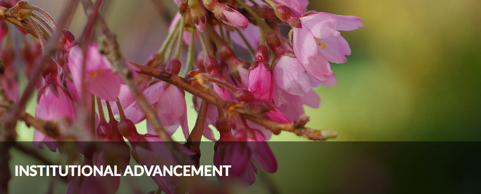 Institutional Advancement