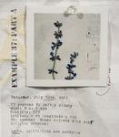 Example 37: Part A by Liz Obert