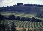 Erath Vineyards, 1998