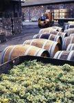 Grapes and Wine Barrels