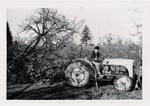 David Lett Pulling Prune Trees