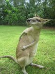 Itchy Kangaroo by Mackenzie Lowen