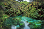 Te Waihou–Blue Springs by Audrey Lichten