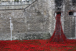 Weeping Window by Lauren Card