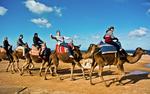 Camel Caravan by Joey Paysinger