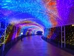 Tunnel of Light and Wonder by Alyssa Kuwamoto