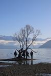Wanaka Tree by Grace Rieman