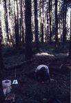 West Cascade Slopes Archaeological Dig