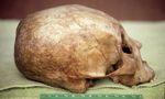 Chinookan Skull