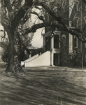 Pioneer Hall and the Old Oak, 1950