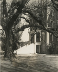 Pioneer Hall and the Old Oak, circa 1936-1939
