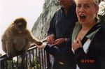 Feeding a Monkey at the Rock of Gibraltar