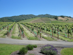 Abacela Winery Vineyard by Linfield College Archives