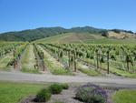 Abacela Winery Vineyard