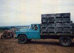 Elton Ingram in Truck during Harvest