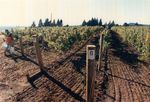 Elton Vineyards during Harvest 01 by Unknown