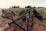 Elton Vineyards during Harvest 01