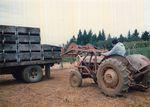 Elton Vineyards during Harvest 03
