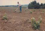 Elton Vineyards Planting 10