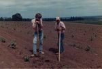 Elton Vineyards Planting 11 by Unknown