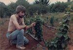 Elton Vineyards Planting 15