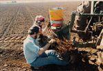 Elton Vineyards Planting 05