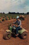 Betty O'Brien Planting at Elton Vineyards