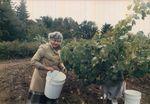 Elton Vineyards Harvest Party 04