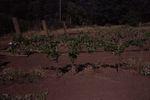 Elton Vineyards during Harvest 07