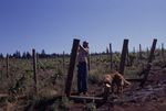 Allan Ingram Works on Trellises 04 by Unknown