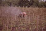 Working in the Vineyards 03 by Unknown