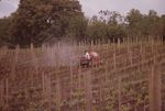Working in the Vineyards 04 by Unknown