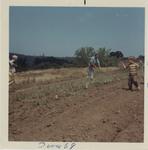 Planting First Vineyard 01