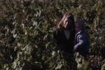Vineyard Nursery 03