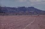 Planting First Vineyard 06
