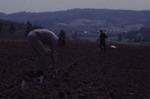 Planting First Vineyard 07