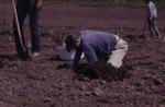 Planting First Vineyard 08