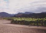 Vineyard and Mountains by Philippe Girardet