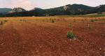 Newly Planted Vineyard by Philippe Girardet