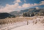 Vineyard in Snow 01 by Philippe Girardet