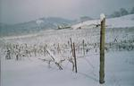 Vineyard in Snow 02 by Philippe Girardet
