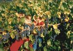 Bonnie Girardet among the Grapevines