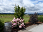 Mt. Hood Winery Tour 01