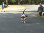 Oak Knoll Winery Dog 01