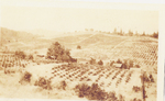 Historical Vineyard 03 by Unknown