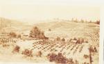 Historical Vineyard 03