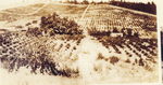 Historical Vineyard 05 by Unknown