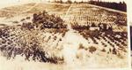 Historical Vineyard 05