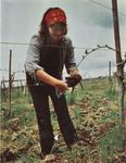 Nancy Ponzi Working at the Vineyard