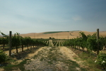 Tero Estates Winery 03